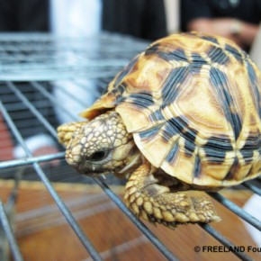 Wild and Wonton: The Illegal Trade in Wildlife